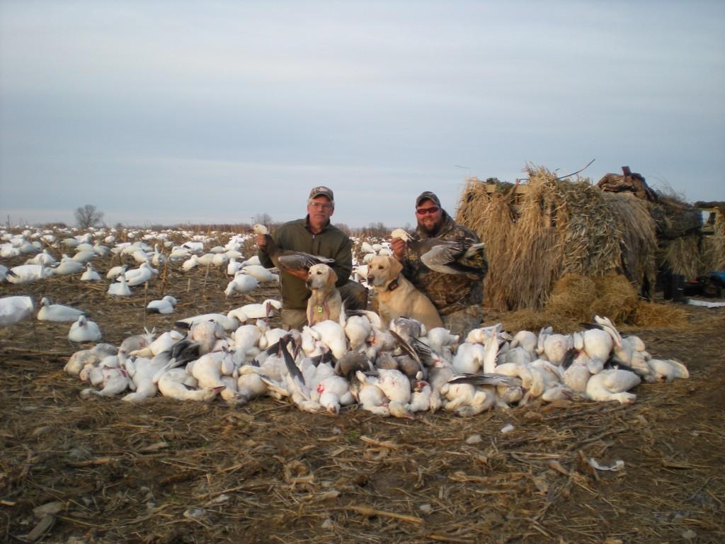 Snow Goose Hunting NY